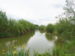 claygate fishing lakes