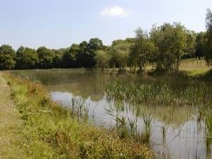 Park Farm reservoir kent